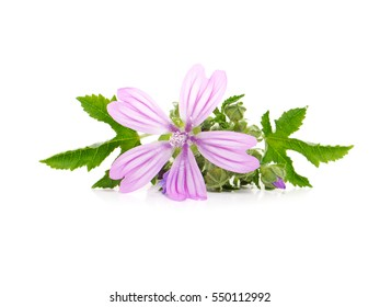 Common Mallow (Malva sylvestris ) plant with pink flowers and leaves