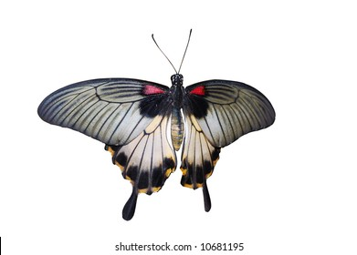 Common Mormon butterfly, isolated on white