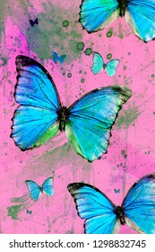 Common morpho (emperor) - several butterflies on pink background