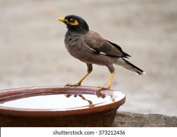 Wildlife of Gujarat, India