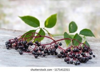 Common names: elder, black elder, European elder, European elderberry and European black elderberry.
