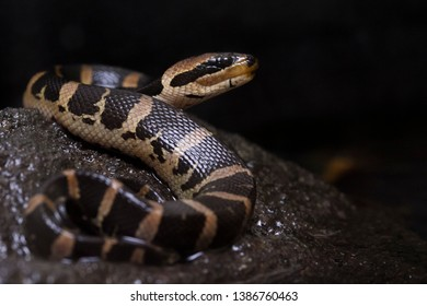 Snake Face Images, Stock Photos & Vectors | Shutterstock