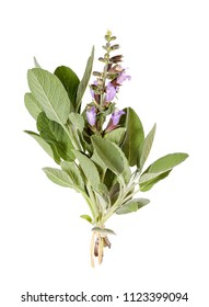 Common sage with blossom