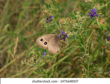 Wood Nymph Butterfly Images, Stock Photos & Vectors