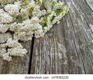 Common yarrow (Achillea millefolium) white flowers close up top view on old wooden background, selective focus. Medicinal wild herb Yarrow. Medical plants concept.