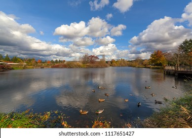 Commonwealth Lake Park with ducks in the lake in Beaverton Oregon on a beautiful fall day