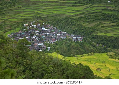 Community in the middle of a Rice Terraces