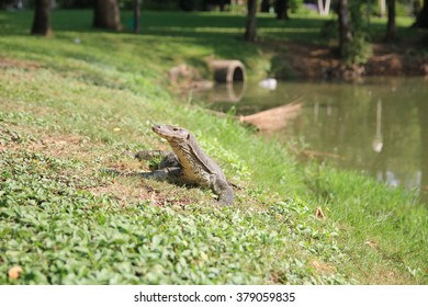 comodo dragon in international park  in thailand