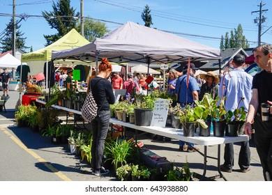 Comox Valley~Vancouver Island,BC, Canada, May 20 2017 Village Market Days on Dunsmuir Avenue in Cumberland~Vancouver Island,BC, Canada