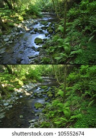 Comparison shots of nature image without polarizer (above) and image with circular polarizer filter (below)