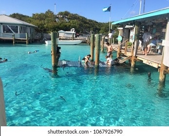 COMPASS CAY, EXUMAS, BAHAMAS - JUNE 3, 2017. Tourists petting the famous Bahamas nurse sharks in the dock and snorkeling in the crystal clear water in Compass Cay