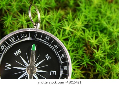 Compass in the moss