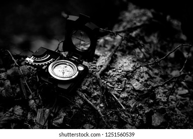 Compass to navigate in the forest