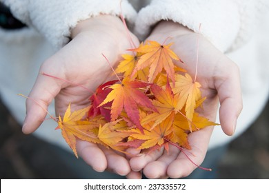 Compassion with Autumn Maple Leaves