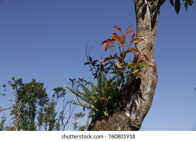 The competition between a budding tree and the ferns of parasitic plants