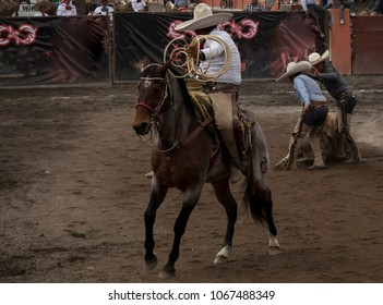 Competition Of Cowboys Horses Different Colors