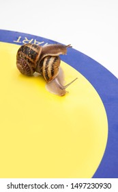 Competitions between snails, crossing the start line, on by one, with a place for text, without anyone, close
