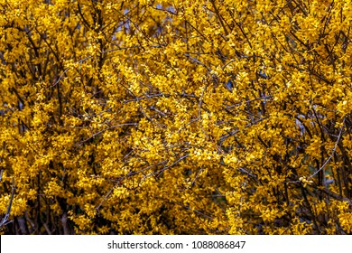 COMPIEGNE, FRANCE - APRIL 7TH, 2018. Small flowers with yellow petals in the field of the Castle of Compiegne.