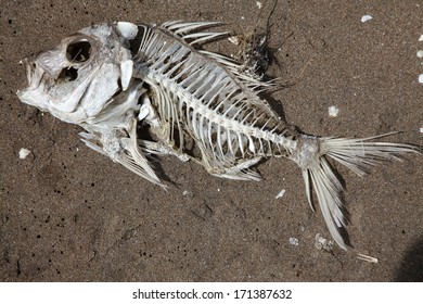A complete fishy skeleton on the beach with little flesh left on the bones