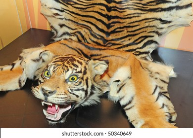 Complete Tiger Head And Skin On Display