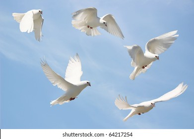 Composite of a beautiful white dove in flight, blue sky background