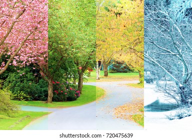 A composite collage of four image of the same street lined with cherry trees, photographed in all four seasons from the exact same location. Branches in the trees line up perfectly.