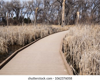 A composite decking walkway in a marsh area.  The walkway is surrounded by reeds in water and several trees.