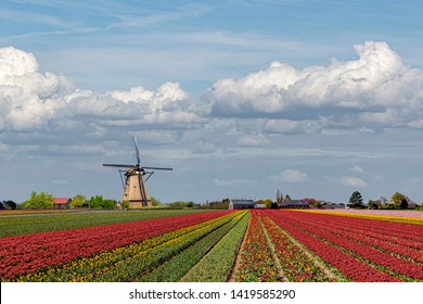 Composite image creating the concept of the iconic Dutch landscape during the tulips and spring season around the country with multi-color tulip bulb farm and windmill everywhere