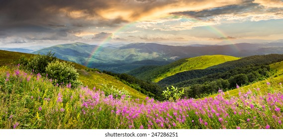 composite landscape with high wild grass and purple flowers on the top of high mountain with rainbow