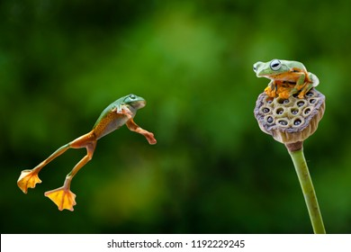 Composite photo of a jumping frog