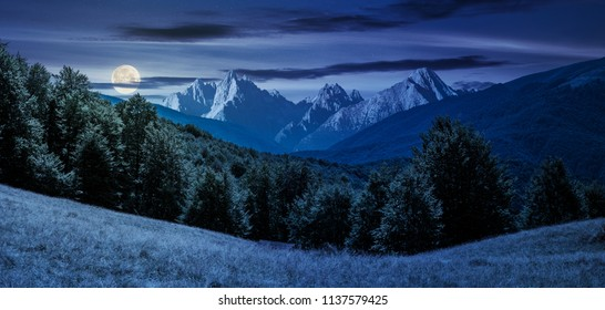 composite summer landscape in mountains at night in full moon light. perfect countryside scenery with beech forest on a grassy hillside and High Tatra mountain ridge in the distance