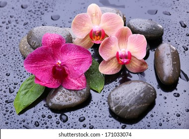 Composition with beautiful blooming orchid with water drops and spa stones, on  gray background