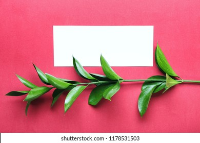 Composition with blank card and fresh ruscus branch on color background