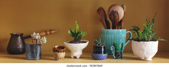 composition of cacti and succulents in ceramic pots of chamotte in the kitchen on a shelf