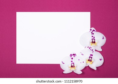 Composition of clean sheet of paper decorated with white orchid flowers on dark red background with copy space. Top view, Flat lay.