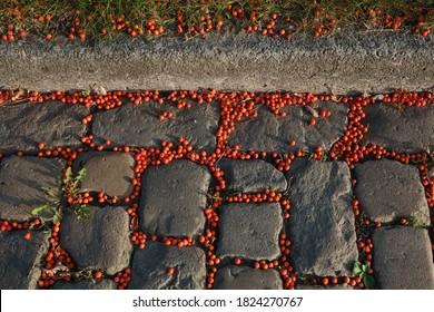 Composition of cobblestones, sidewalk and rowan berries