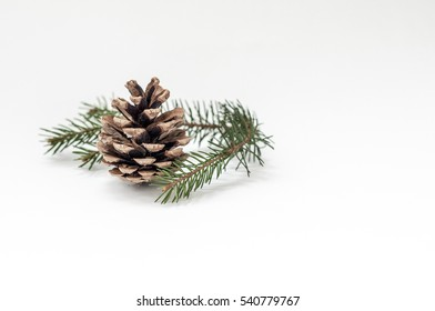 The composition of cones and spruce twigs on a white background