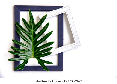 Composition copy space idea on beauty shiny Xanadu leaf on wood picture frame for interior design