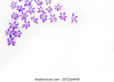 Composition of delicate, beautiful flowers. Spring flowers on white background. Easter concept. Apartment, top view.