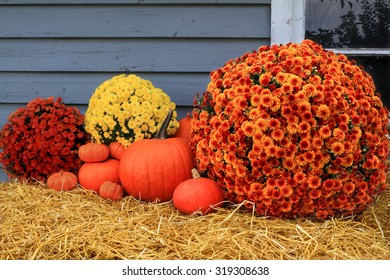 Composition from different sizes orange pumpkins and mum fall flowers with different colours orange, yellow, red over hay as decoration of old barn for celebration of Harvest and Thanksgiving day