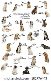 Composition of dog barking onomatopoeias from the world, Spanish version