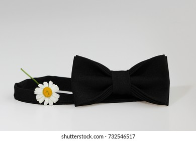 Composition: Extravagant black official classic bow tie, small chrysanthemum flower similar to chamomile on a white background.