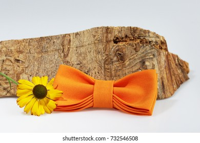 Composition: Extravagant orange bow tie, yellow flower and piece of sawn timber on a white background