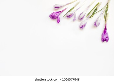 Composition of flowers with blue and yellow crocuses. Spring flowers on white background. Easter concept. Apartment, top view.