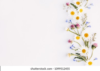 composition of flowers, daisies, clover, wildflowers on a white background