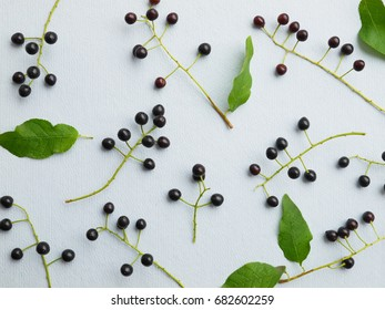 Composition of flowers and plants. Top view. Floral abstract background. Flower concept. Bird cherry on a blue textural background. Pattern of bird cherry. Floral abstract background.