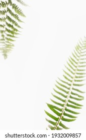 Composition of green tender fern stems with lush narrow leaves on white background