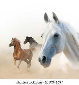 Composition of horses: white stallion portrait and two runners