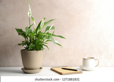 Composition with peace lily, notebook and cup on table against color wall. Space for text - Shutterstock ID 1371881831