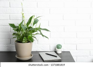 Composition with peace lily and notebook on table against brick wall. Space for text